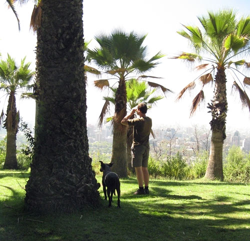Binoklivaade kõrgustest, hulkuv koer samuti kaemas