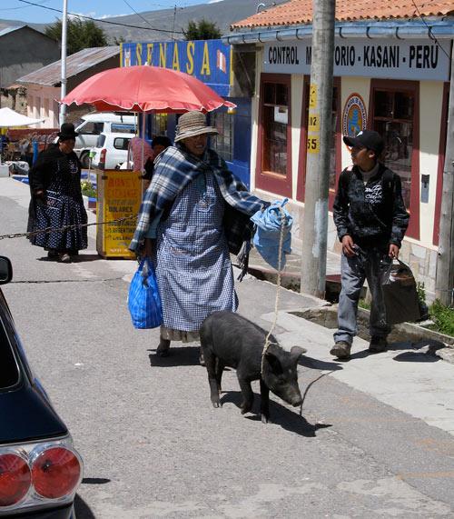 Tädi seaga nööri otsas Perusst Boliivasse piiri ületamas