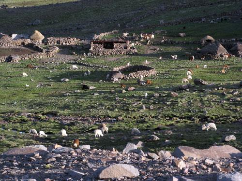 Peruu talupidamine - laamad ja kivist-savist ehitised