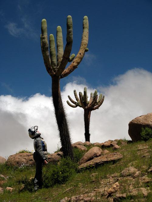 Kaktus ja Kariina