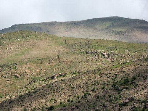 Kaktusemaastik
