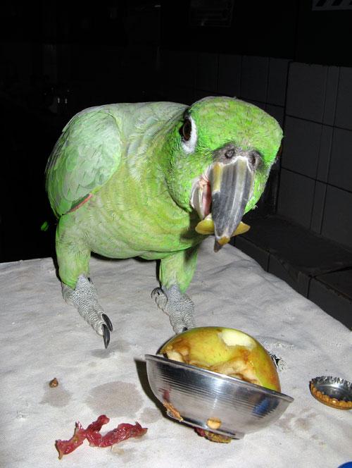 Papagoi einestab restoranis