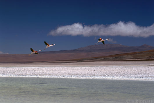 Flamingod lennus, Boliivia