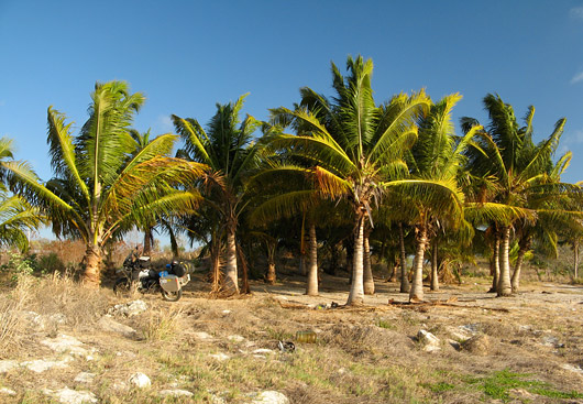 Sinna palmide alla me telgi püsti panimegi