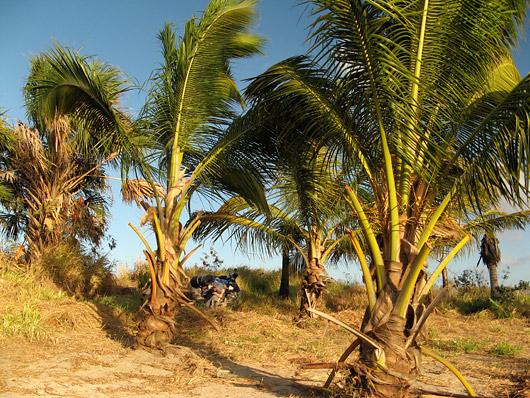 Palmid päikeseloojangus
