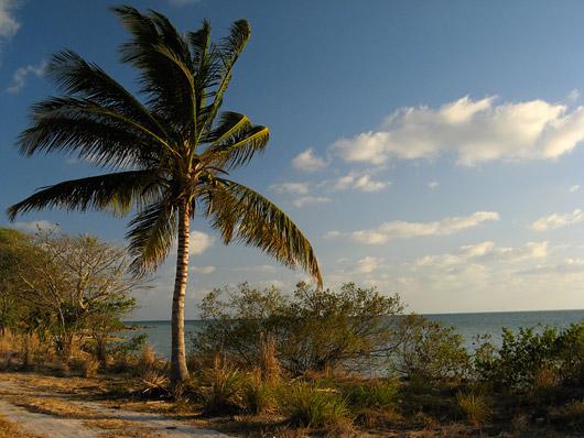 Taamal tuuline Mehhiko laht