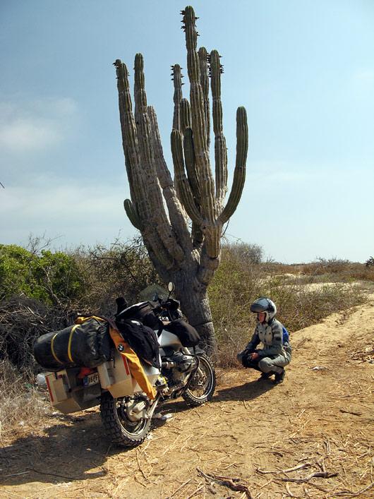 Väike joogipeatus kaktuse all