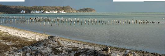 Yucatáni poolsaare Mehhiko laht - linnud vaiadel