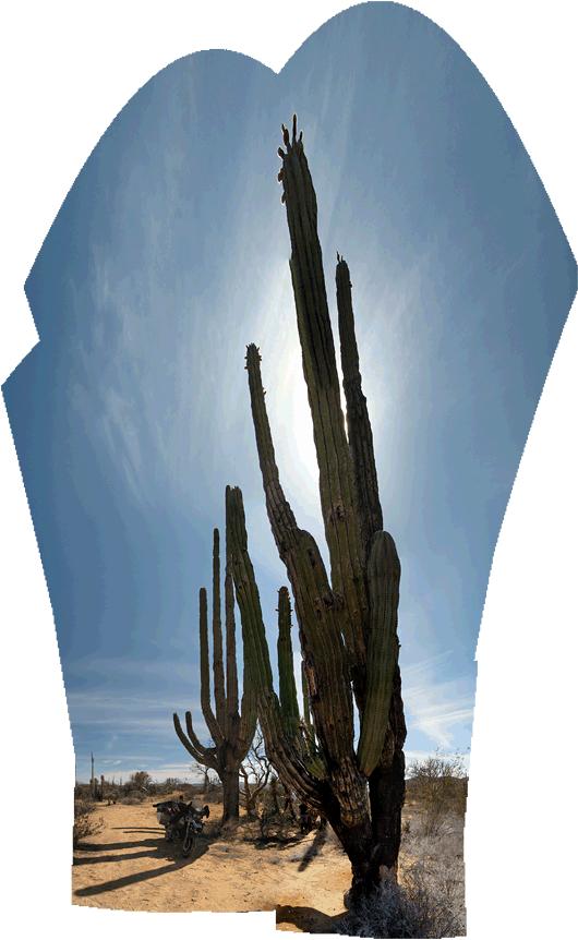 Baja loodus (6) - uskumatu suurusega kaktused