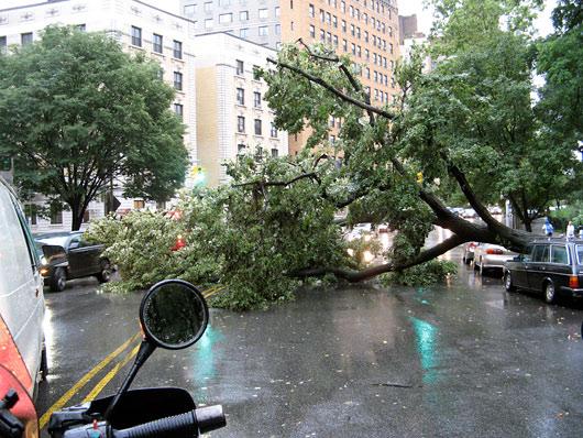 Puu kukkus autole ja tee peale ette