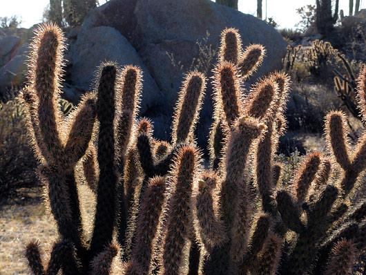 Kaktused