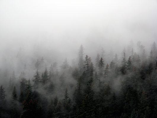Metsad pärast vihma - värskus Kenai poolsaarel