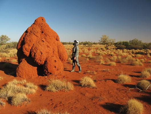 Üks hiiglaslik termiidipesa (klikka, et suurendada)