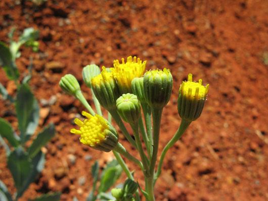 Taimestik Kesk-Austraalias