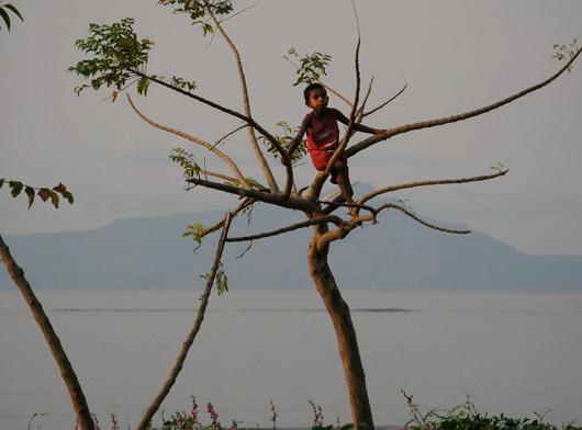 Poiss puu otsas