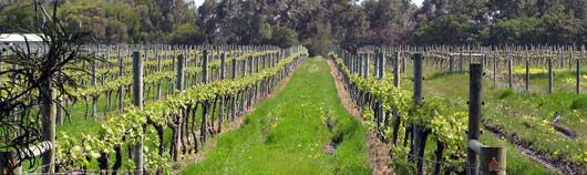 """Viinamarjakasvatus - veinikeldreid on seal Austraalia """"nurgas"""" jalaga segada."""