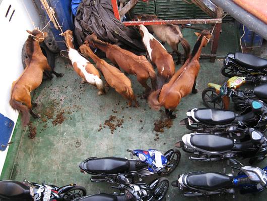 Rollerid ja hobused - Indoneesia eelistatud transpordivahendid