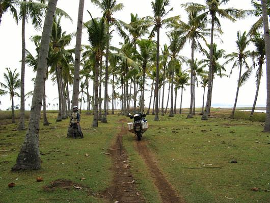 Palmisalus Lombokil