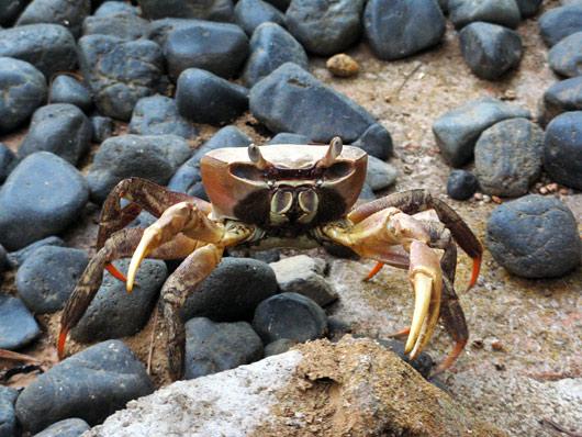 Krabi otse meie hosteliruumi ukse taga uitamas