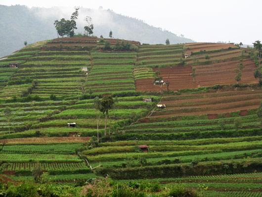 Mägine põllumaa