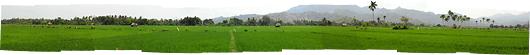 Lomboki riisiväljad