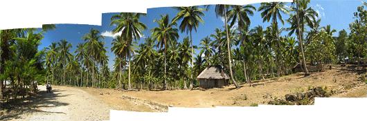 Timori maastikud (3) - uhked palmid mägise küla kohal