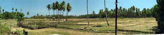 Timori maastikud (5) - põllumaa