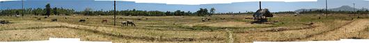 Timori maastikud (6) - põllumaa