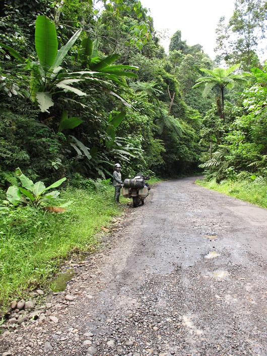 Sumatra teeäärne džungel