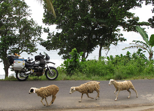 Gessu ja 3 lammast