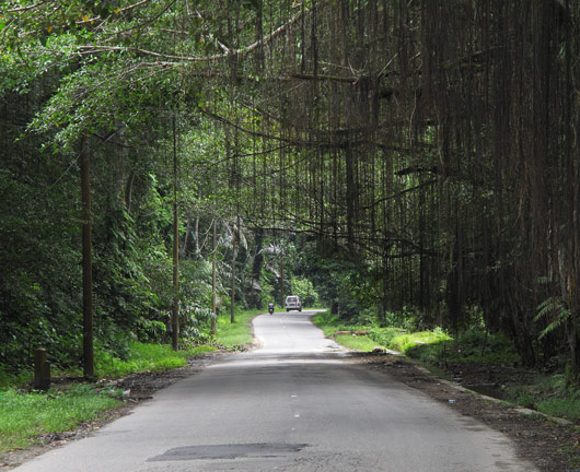 Tee läbi džungli