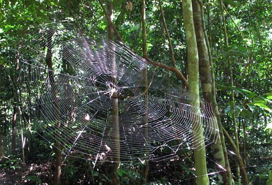 Ämblik džunglis
