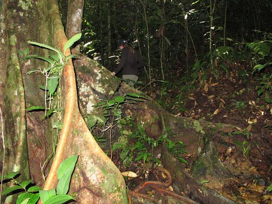 Ronimine džunglis