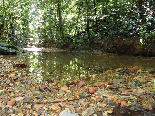 Väiksed selgeveelised jõed Sumatra džunglis - kallas kubiseb verekaanidest