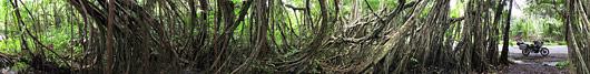 Tihe Sumatra džungel tee ääres