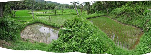 Riisipõllud eri tasanditel