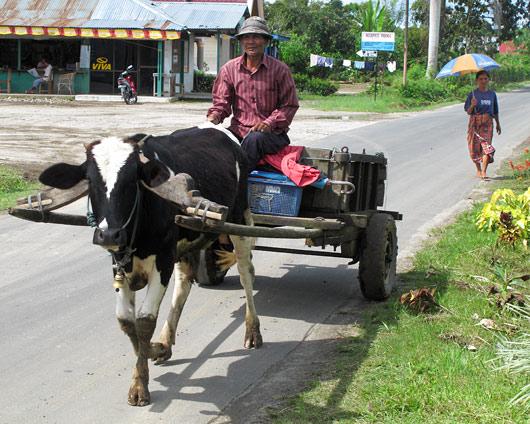 Lehmaga transporteerumas